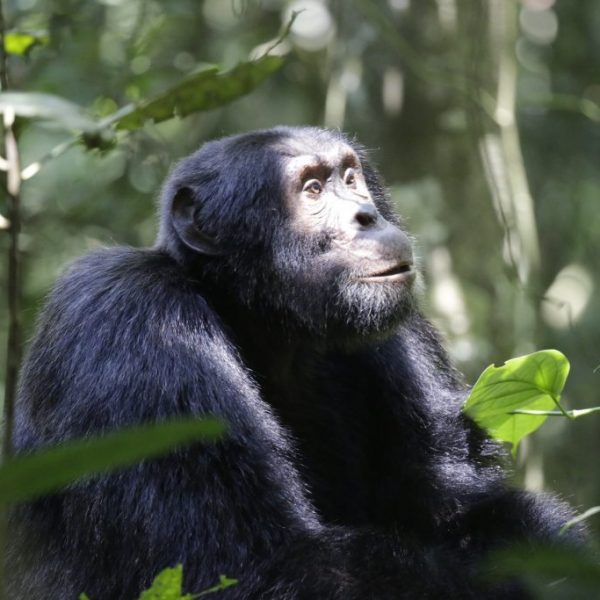 Book With Us To Explore Life By Travelling To Africa 12 Day Uganda Highlights Adventure