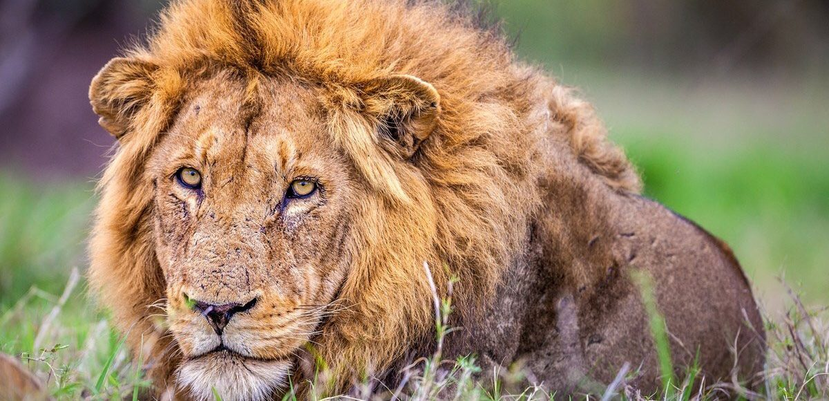 Book With Us To Explore Life By Travelling To Africa Lulu Safaris